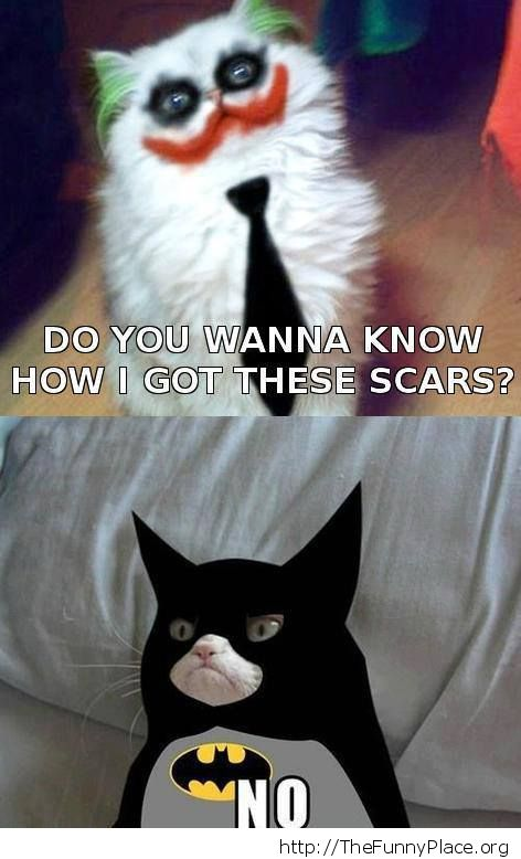 Grumpy cat as Batman