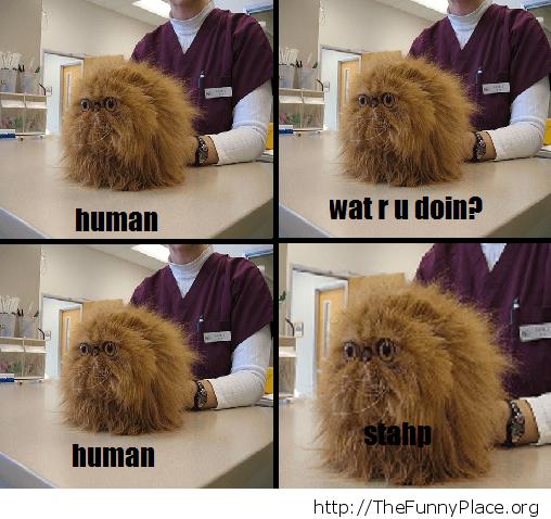 Hairball Cat - Stahp