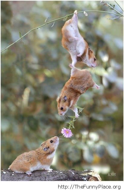 Harvest mouse friendship