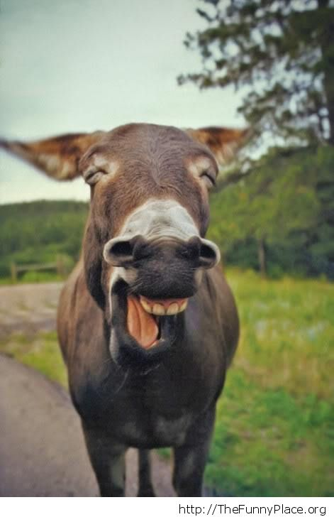 Hehehe donkey