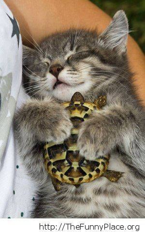 Kitten with turtle