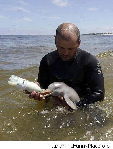 Man feeding baby dolphin