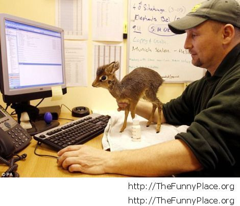 Man with baby Dik-Dik