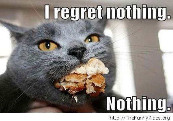 No regret cat