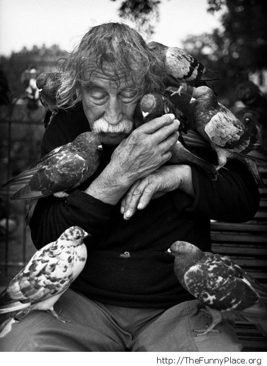 Old man with birds