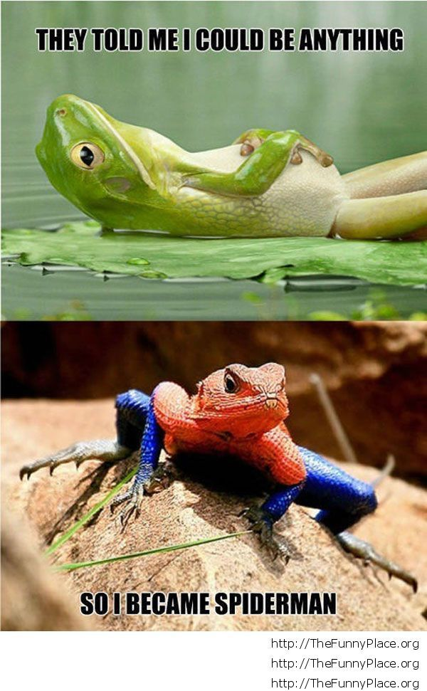 Spiderman frog