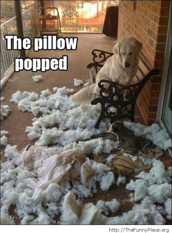 The dog is innocent