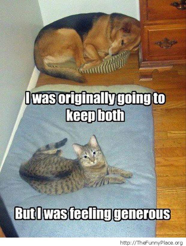 The generous cat