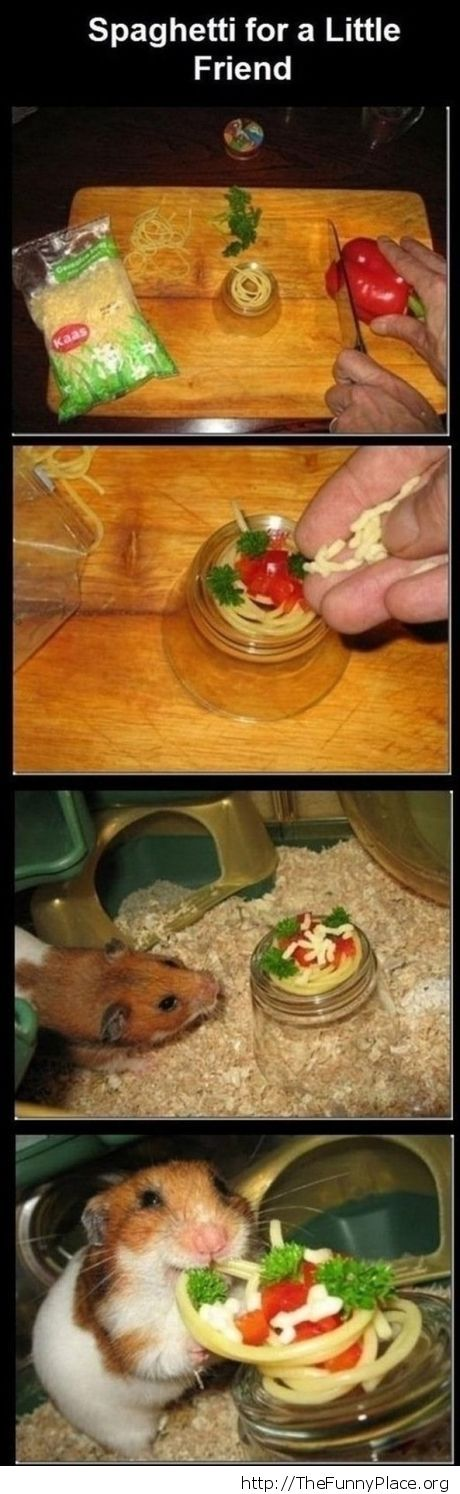 This hamster has a feast