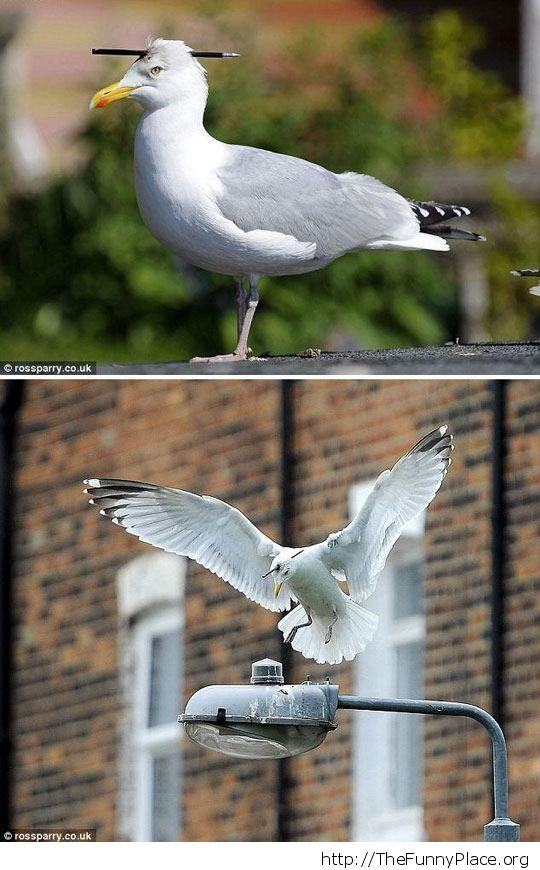 A seagull and his pencil