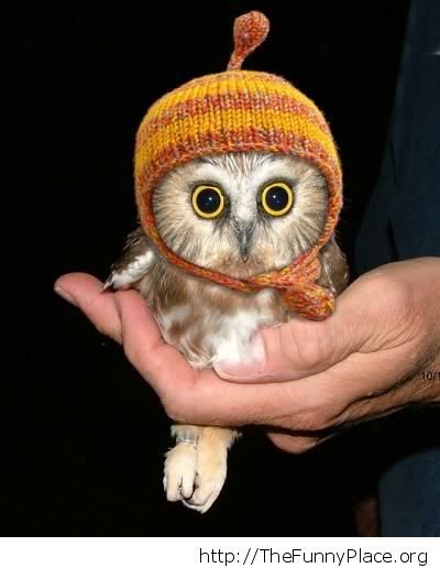 Awesome baby owl picture