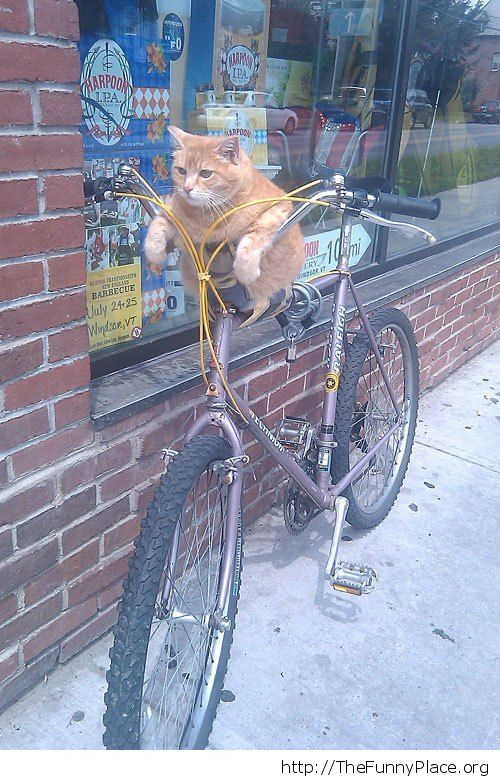 Chillin on your bike