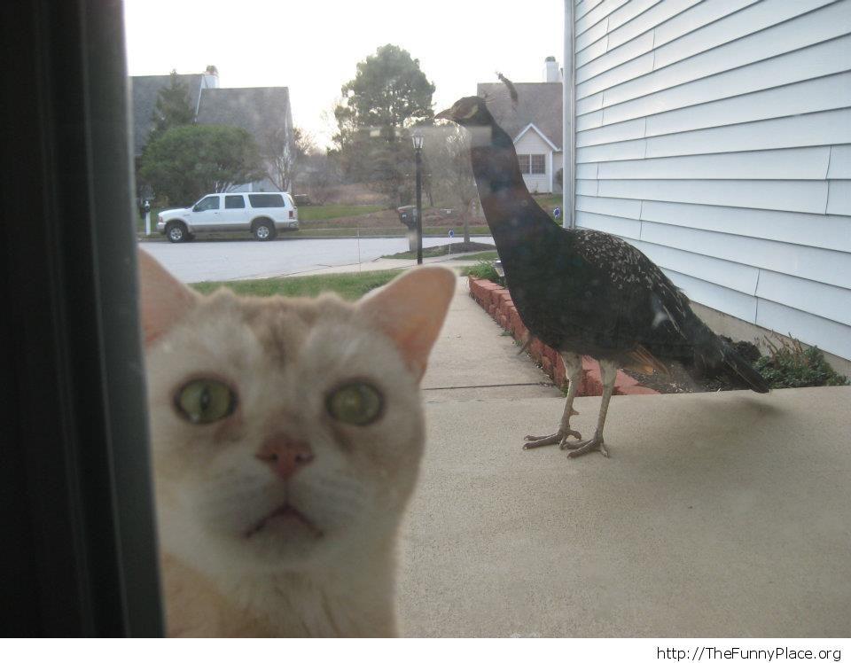 Could you open the door