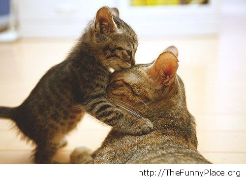 Cute kitty and her mom