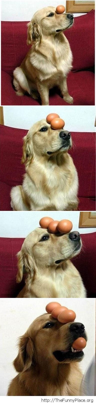 Dog playing with eggs