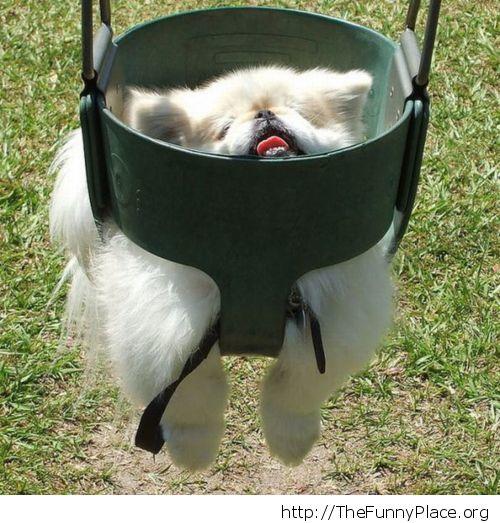 Dog swinging at the playground