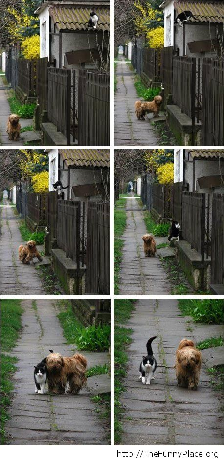 Funny dog inviting cat for a walk
