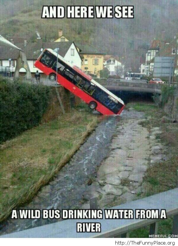 Funny wild bus