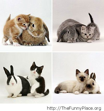 Kittens and rabbits