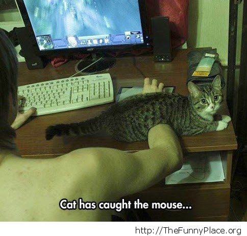 This cat caught the mouse