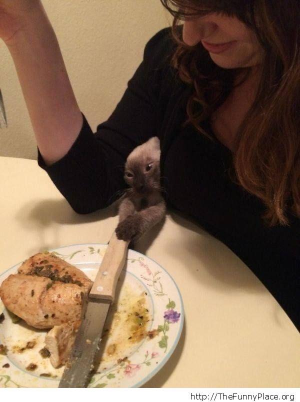 Cat wielding knife