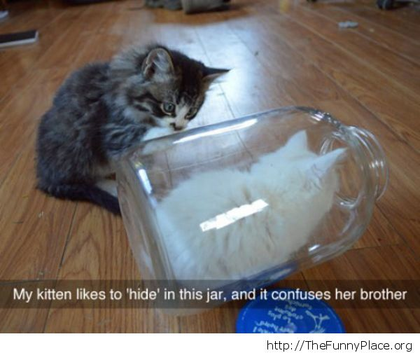 Kitty in a jar