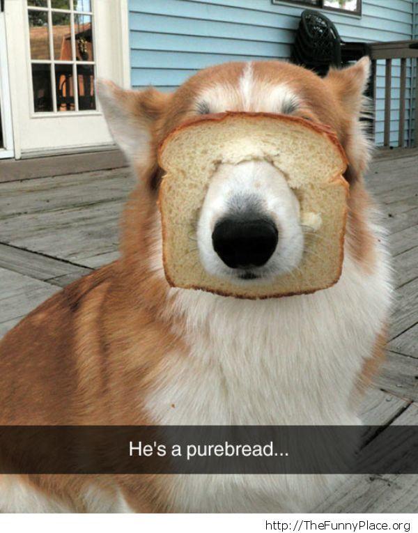 Pure-bread