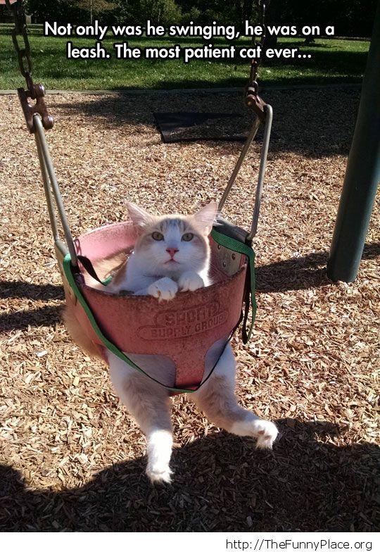 cat swing