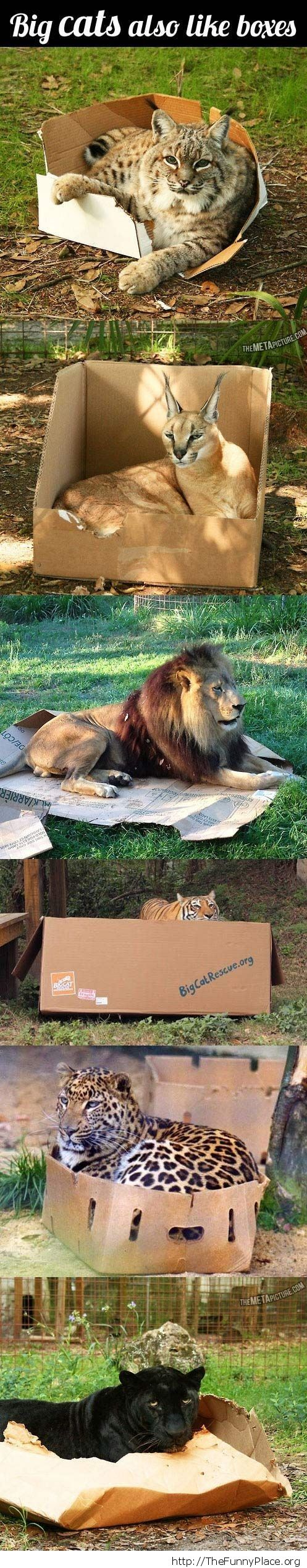 cats and boxes