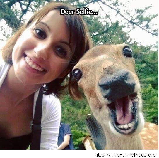 deer bomb