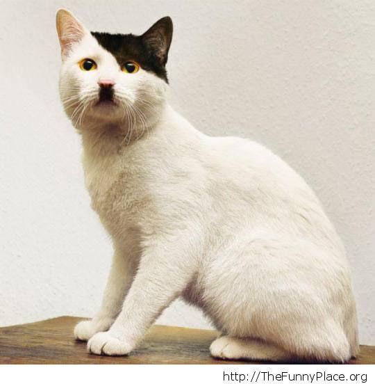hitler cat