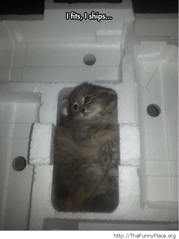 safe packaged kitty
