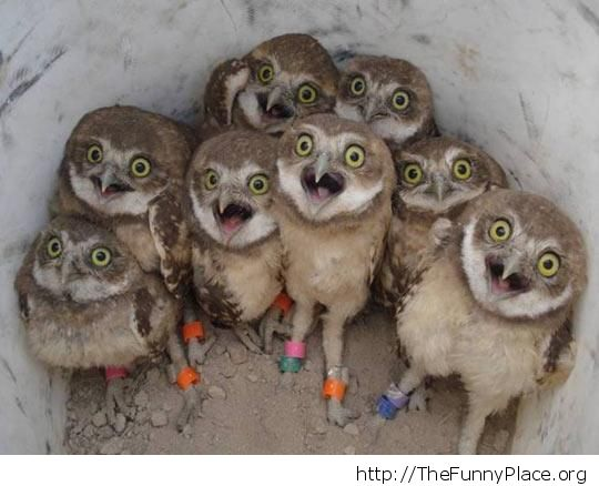 scared owls