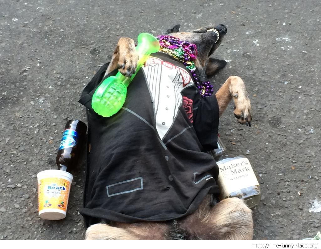 A homeless guy on Bourbon Street trained his dog to play passed out