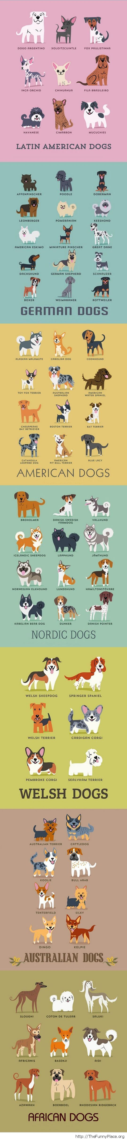 All the dog breeds