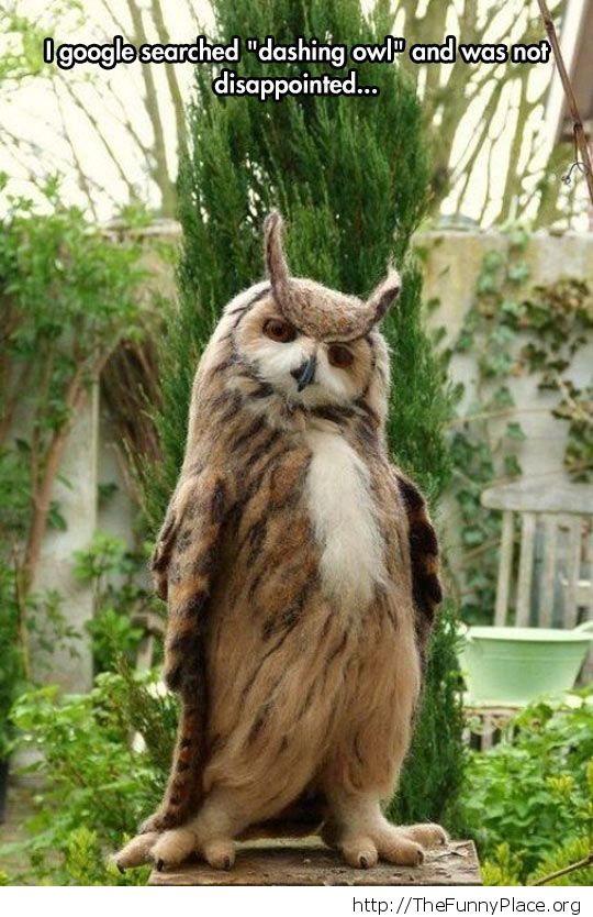Dashing owl