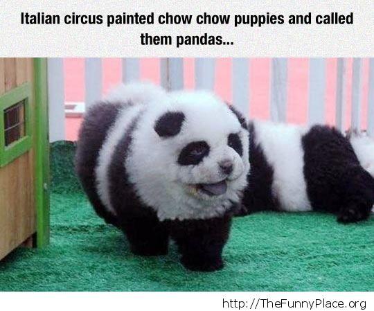 Fake pandas