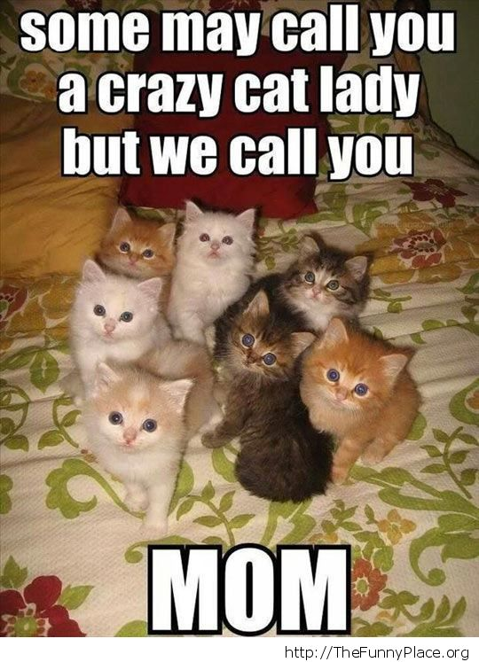 Fluffy cuteness overload