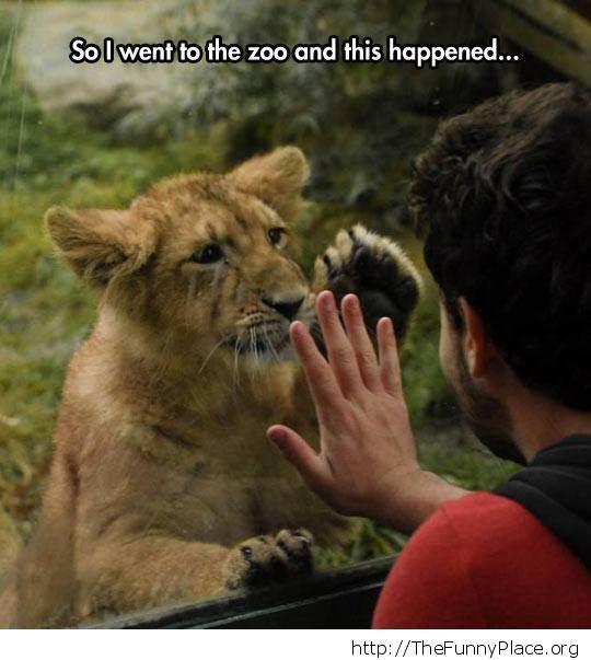 Lion cub salute