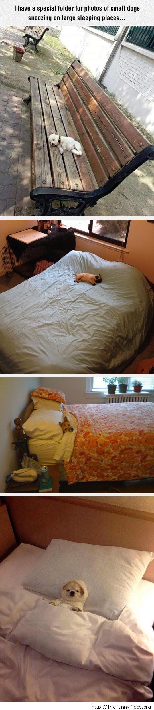 Small dog sleeping