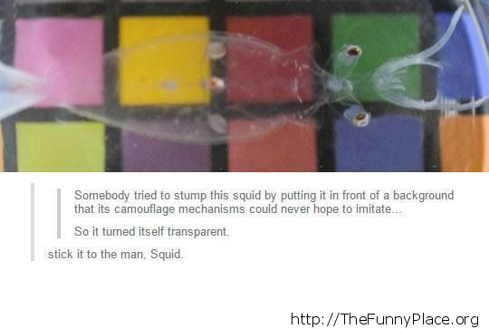 Smart squid