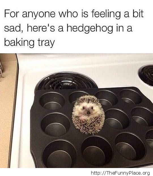 Thinks he is a muffin