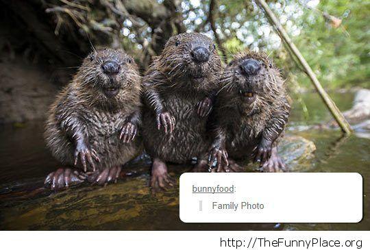 Wet beavers