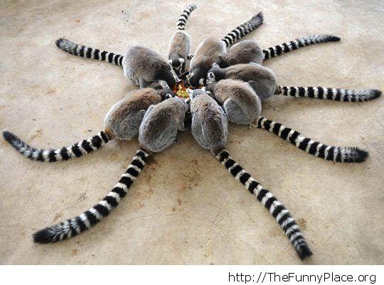 lemur sync