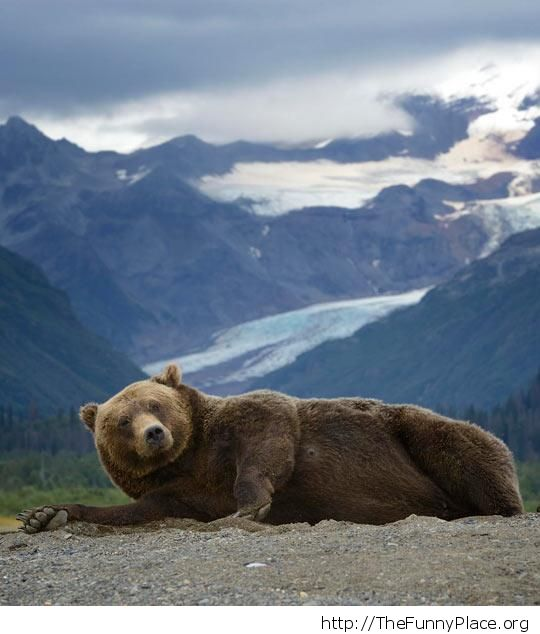 Bear posing