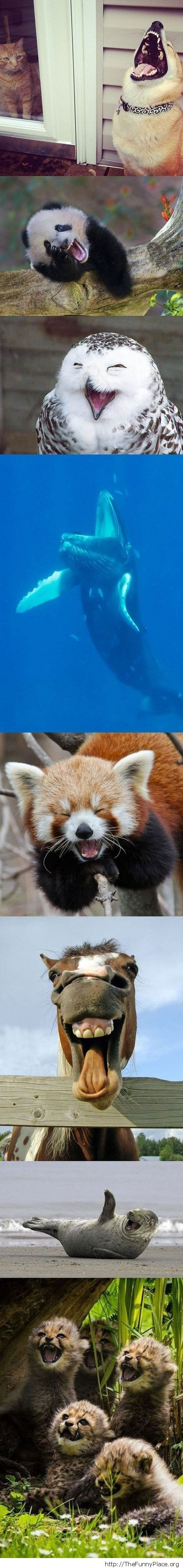 Cute animals yawning
