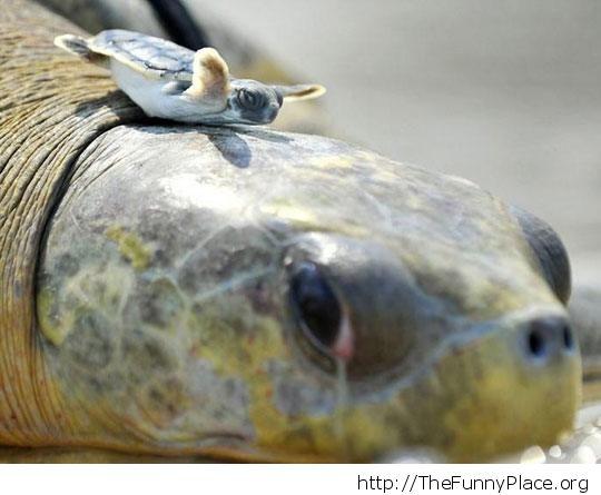 Funny little turtle