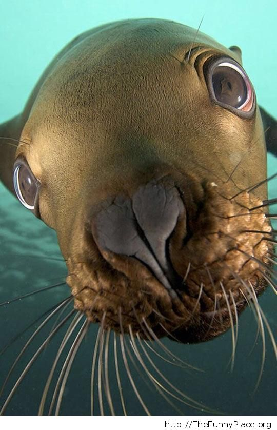Funny seal picture