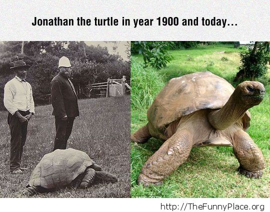 Oldest turtle alive