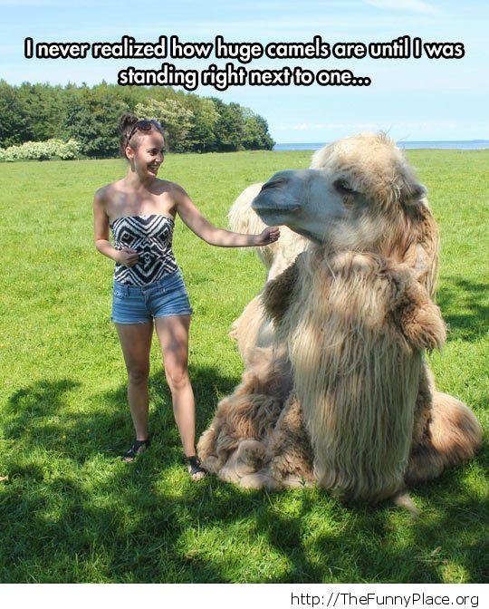 Petting a camel